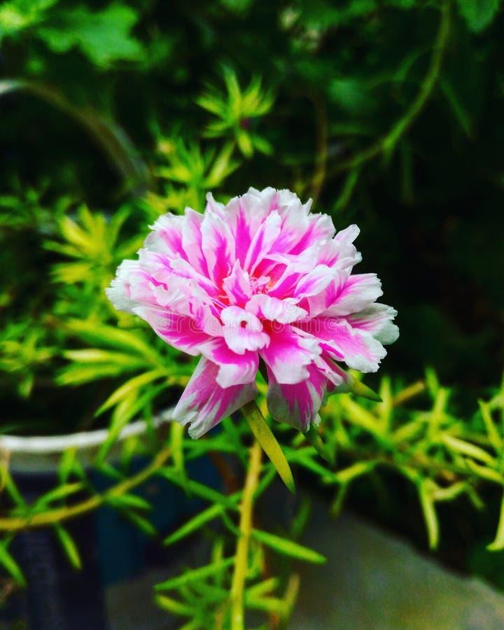 Sombras de una flor de la floración imágenes de archivo libres de regalías