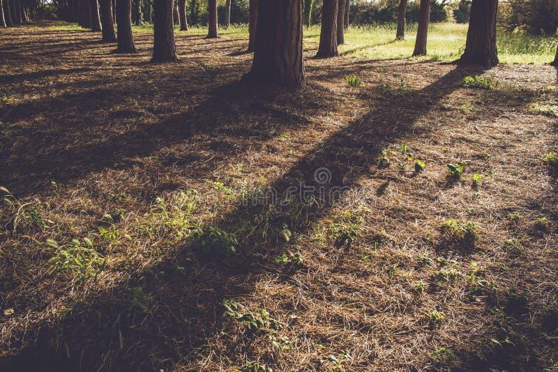 Sombras del árbol fotos de archivo libres de regalías