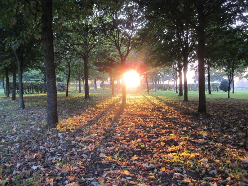 Sombras del árbol foto de archivo