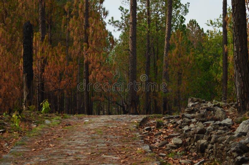 Sombras del bosque fotografía de archivo