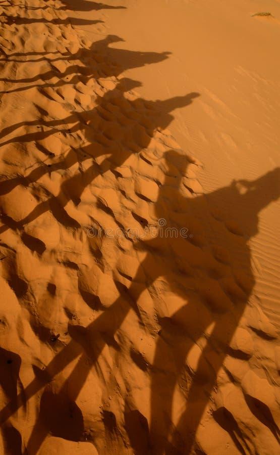Sombras del camello en el desierto del Sáhara imagen de archivo