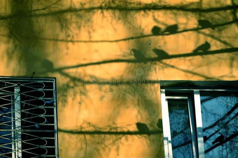 Sombras dos pássaros na parede amarela foto de stock royalty free