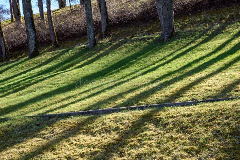 sombras dos troncos de árvore no parque do verão imagens de stock