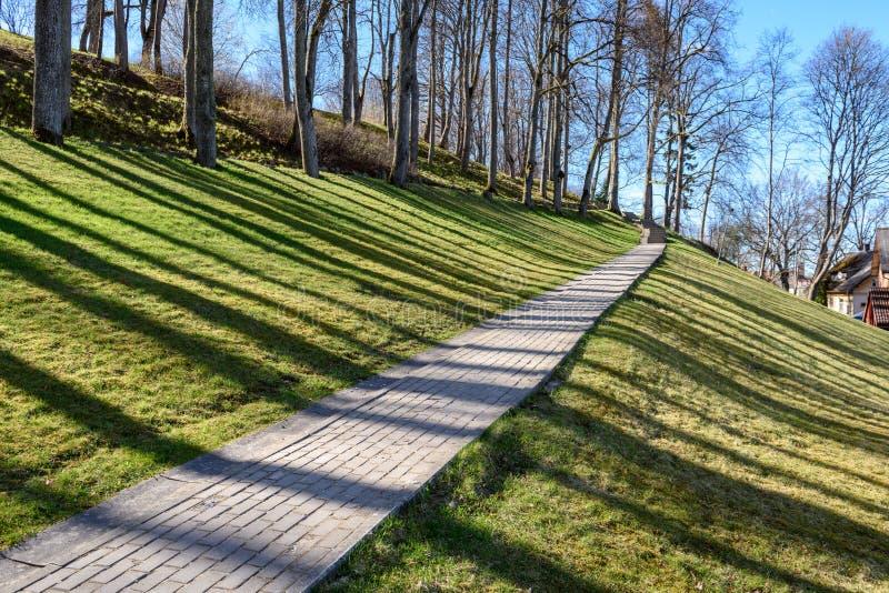 sombras dos troncos de árvore no parque do verão fotografia de stock