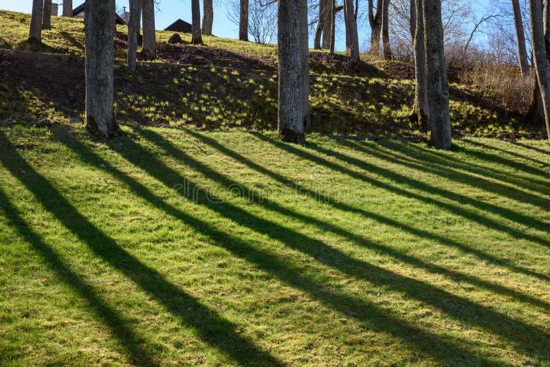 sombras dos troncos de árvore no parque do verão imagem de stock royalty free