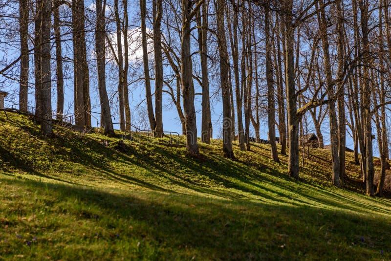 sombras dos troncos de árvore no parque do verão fotografia de stock royalty free