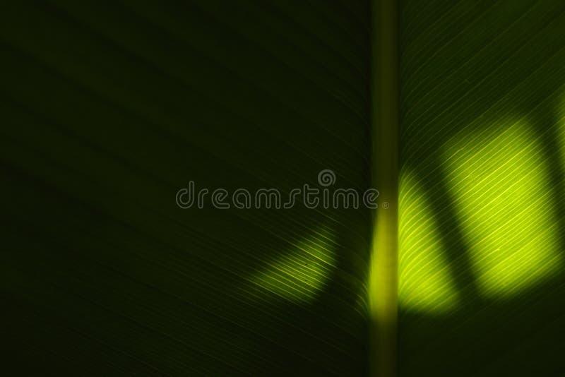 Sombras en la palma fotografía de archivo libre de regalías