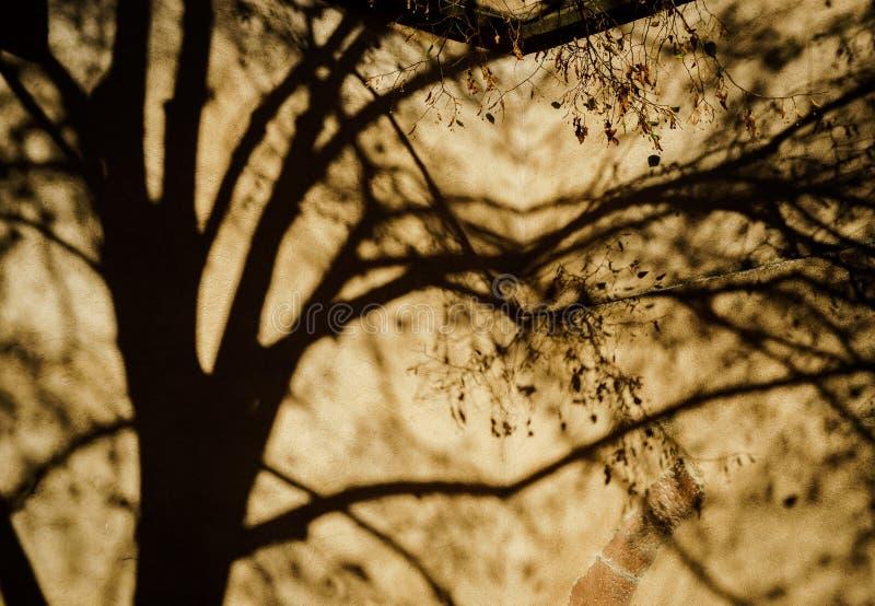 Sombras hermosas del árbol en la pared de la iglesia foto de archivo