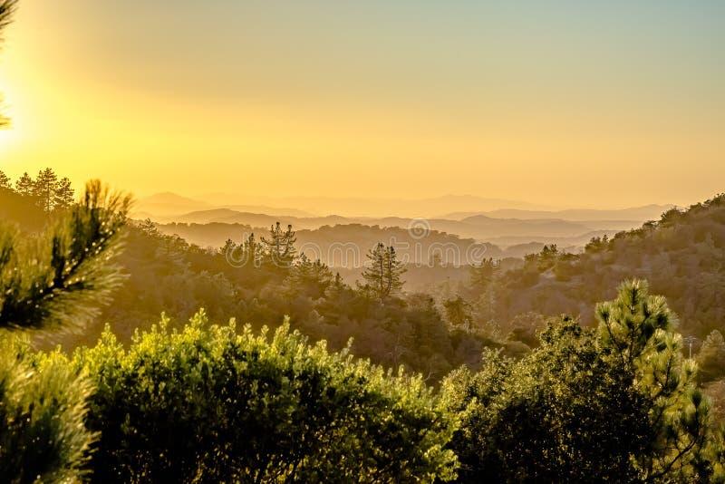 Sombras longas de uma fileira das árvores em um vale verde no crepúsculo imagens de stock royalty free