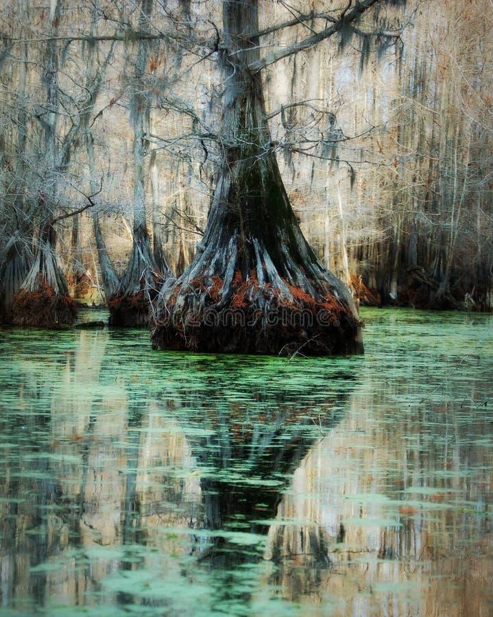 Sombras misteriosas del árbol fotografía de archivo libre de regalías