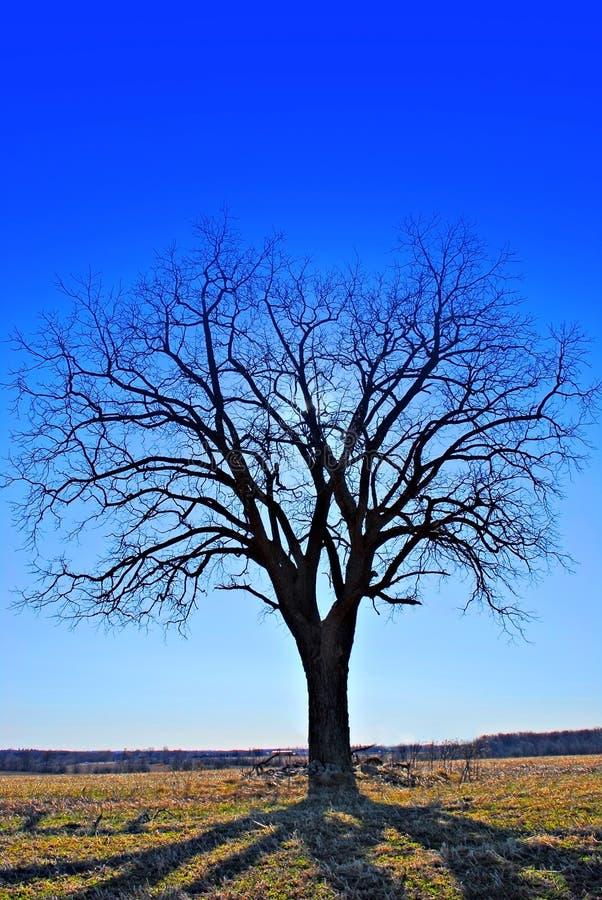Sombras refletindo de uma árvore fotos de stock royalty free