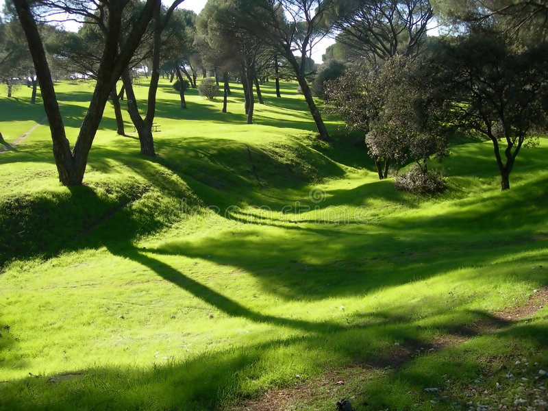 Sombras suaves de la mañana del verano en parque imagen de archivo libre de regalías
