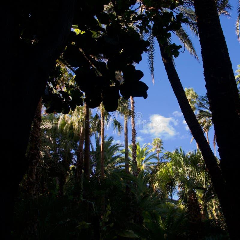 Sombras y palmas en un jardín marroquí foto de archivo
