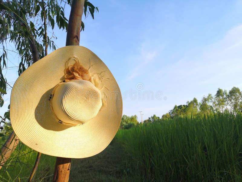 Sombrero dans le fichier de riz image stock