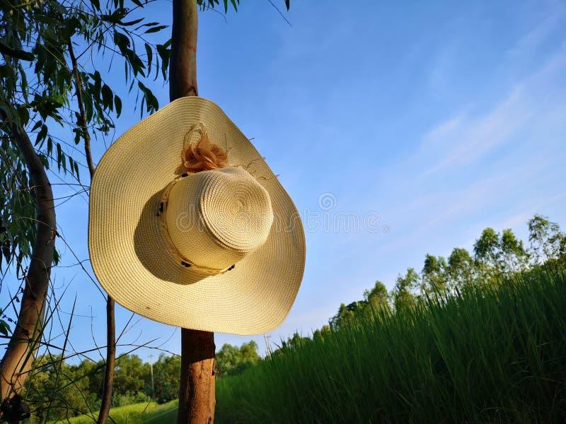 Sombrero dans le fichier de riz images stock