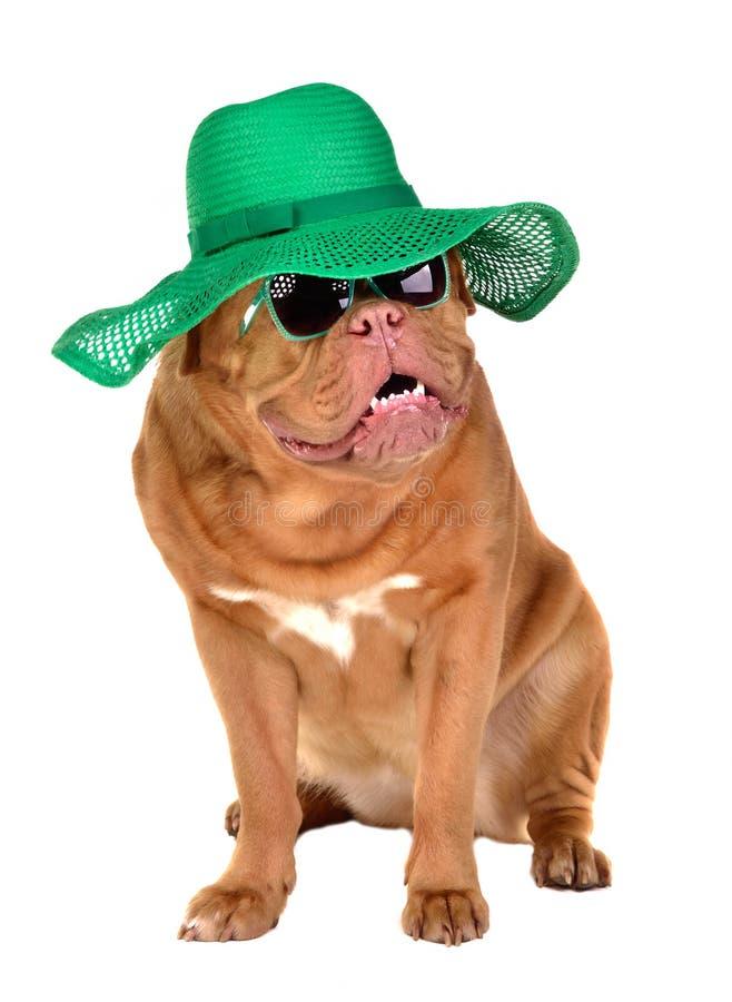 Sombrero de paja del perro de la señora y vidrios de sol que desgastan fotos de archivo