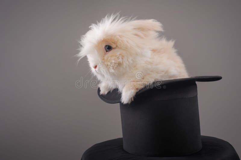 Sombrero mágico con el conejo blanco hermoso foto de archivo libre de regalías
