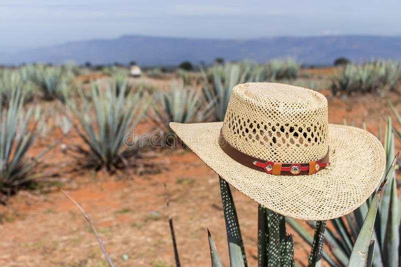 Sombrero på agave Hatt på en kaktus royaltyfria foton