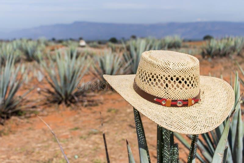 Sombrero su agave Cappello su un cactus Sombrero messicano su agave immagine stock