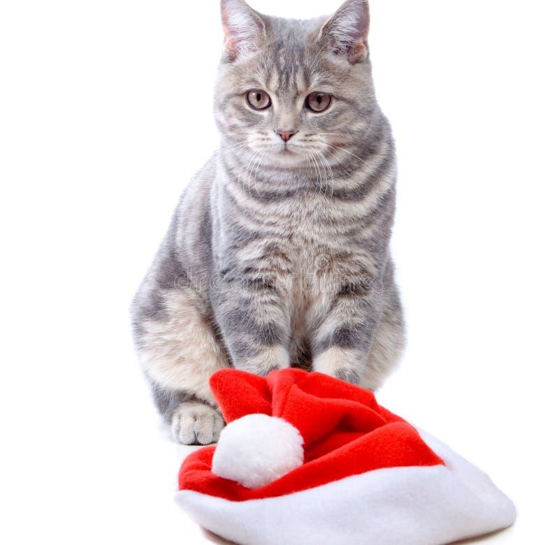 Download Sombrero y gato imagen de archivo. Imagen de felino, gatito - 7284045