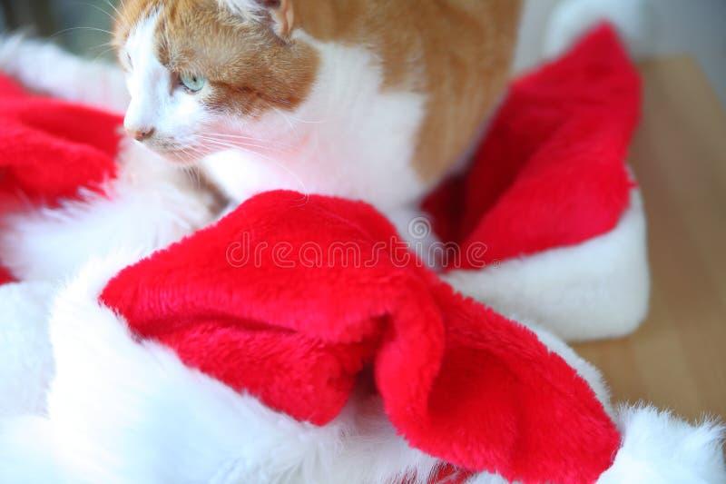 Sombreros de Papá Noel con el gato anaranjado y blanco fotos de archivo