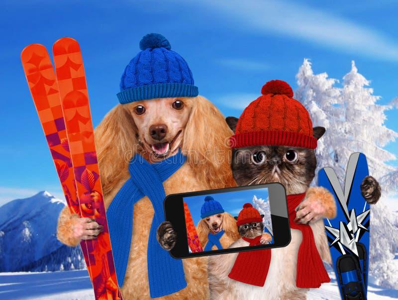 Sombreros del gato y del perro que toman un selfie así como un smartphone imagen de archivo libre de regalías