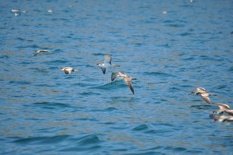 A few birds flying over ocean royalty free stock photography