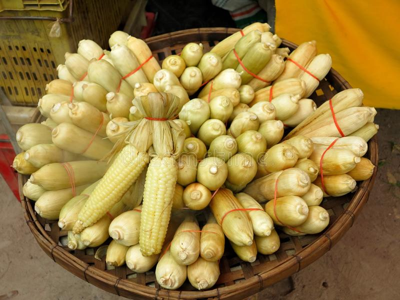 Some bundles of raw maize or corns on a basket royalty free stock photography
