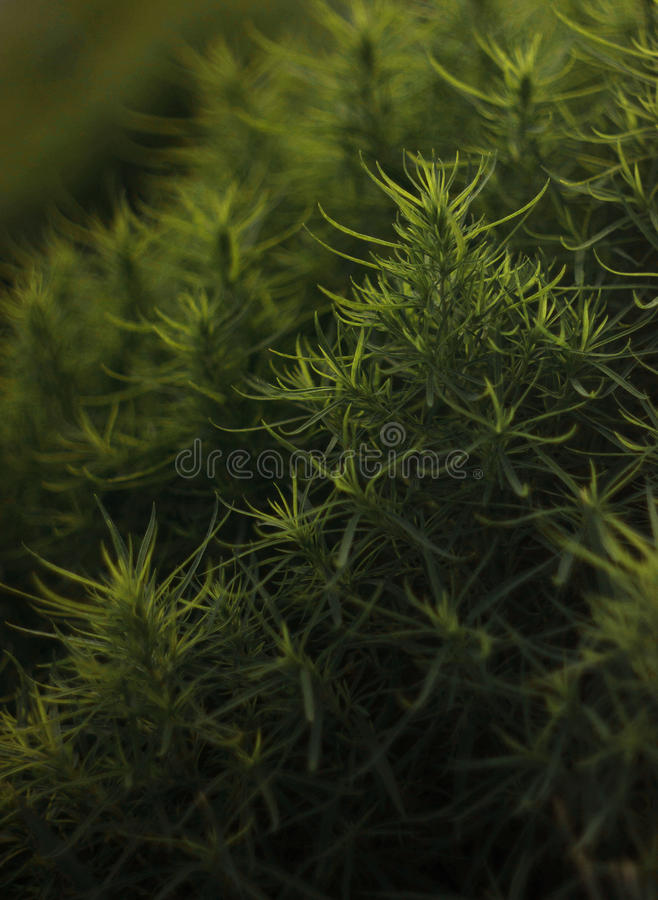 Some bush royalty free stock photography