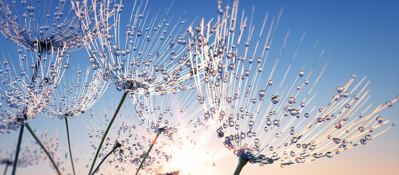 Some Dandelion seeds with dew drops. Some dandelion seed with dew drops in the air in the evenings against a blue sky royalty free stock photo