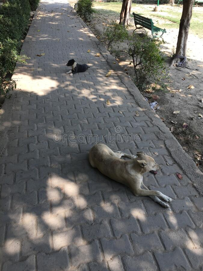 Dog Relaxing in park area. Some Dogs are relaxing in park area during day time on footpath. Dogs are really good friends of humans royalty free stock images