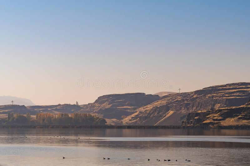Some ducks and the Washington state side of the Columbia River that borders the state of Oregon. USA royalty free stock image