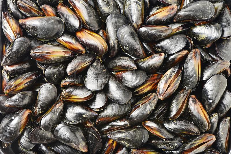 Some fresh and closed organic mussel before cleaning stock photos