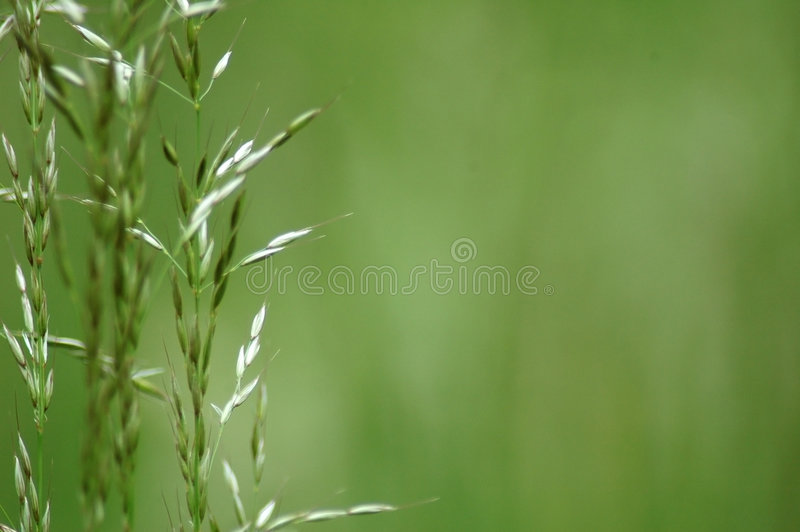 Download Some grass blades stock photo. Image of blue, rural, field - 123858