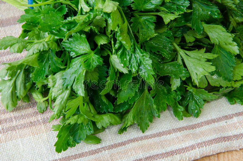 Some green parsley a stock photography