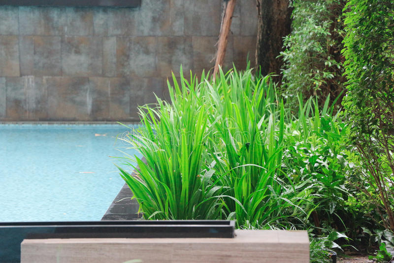 Some nice lush vegetation right along side the swimming pool makes for a nice balance and a peaceful place to swim and play with f royalty free stock photos