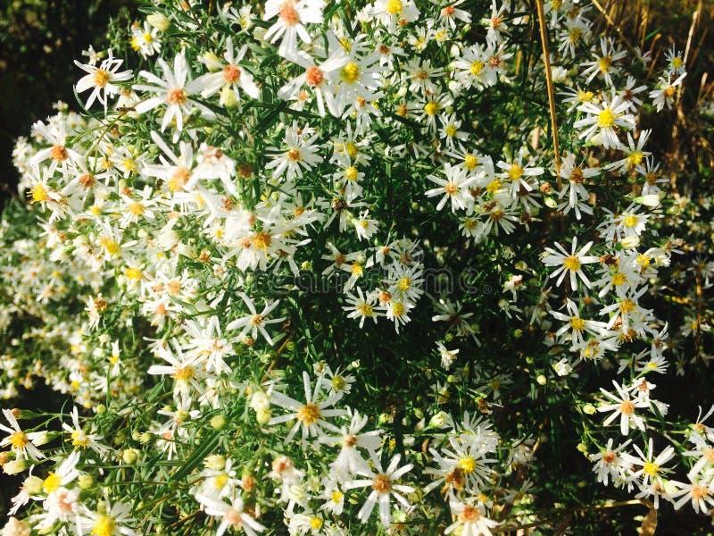 Some Nice White Flowers stock photos