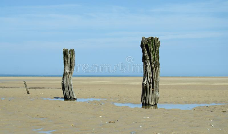 Old wooden posts on a beach. Some old weathered wooden posts on a beach in north Norfolk on a bright summers day in July stock images