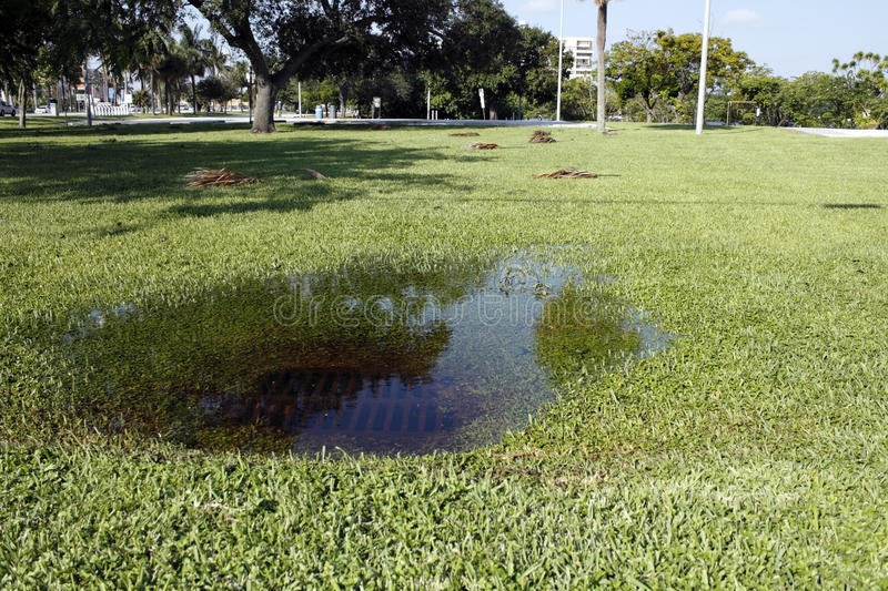 Clogged Storm Drain. In some park grass in Fort Lauderdale, Florida is a sewer storm drain clogged with water from a recent rain storm on a sunny autumn day stock image