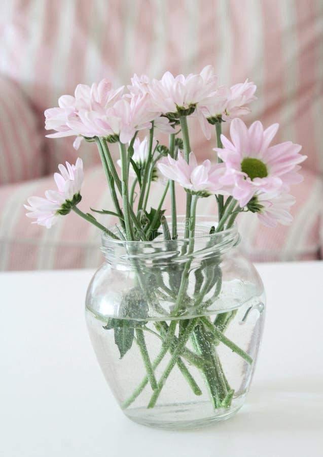 Some pink, beautiful Chrysanthemum royalty free stock images