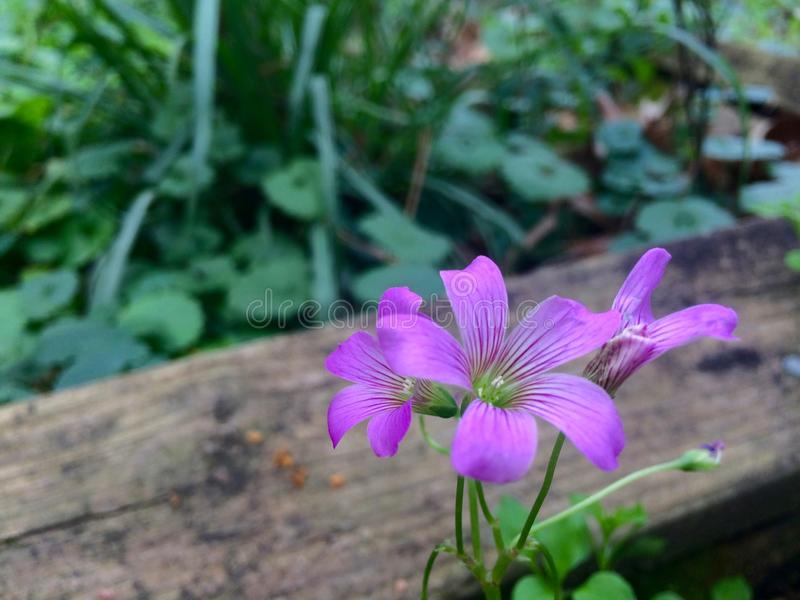 Some pink flowers next to a wooden board stock image