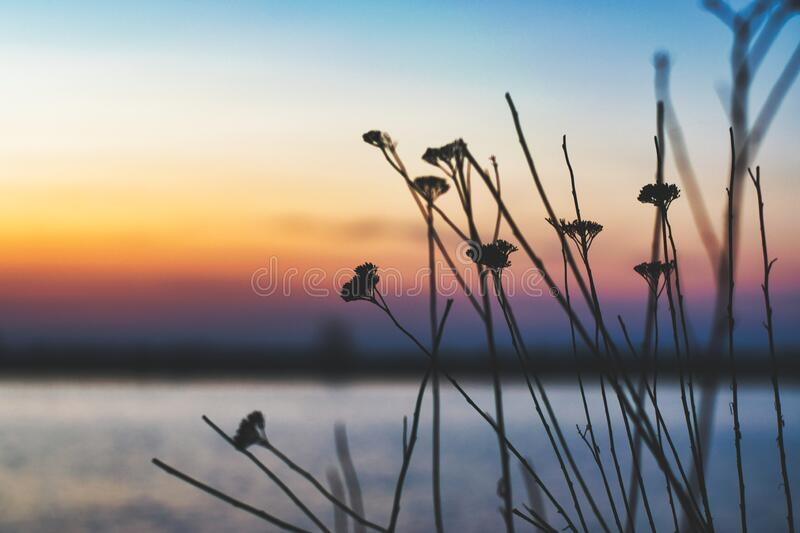 Some plants in the foreground and a beautiful sunset in the background in high contrast at Lacul Morii Lake, Bucharest, Romania.  stock photo