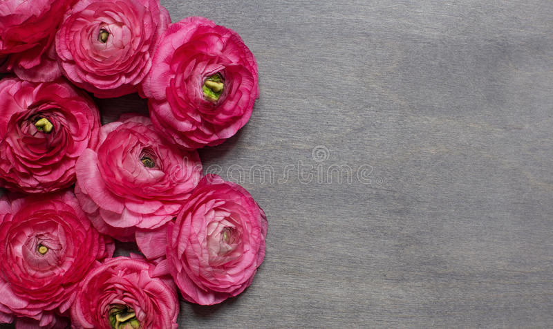 Some red peonies on dark wooden background stock image