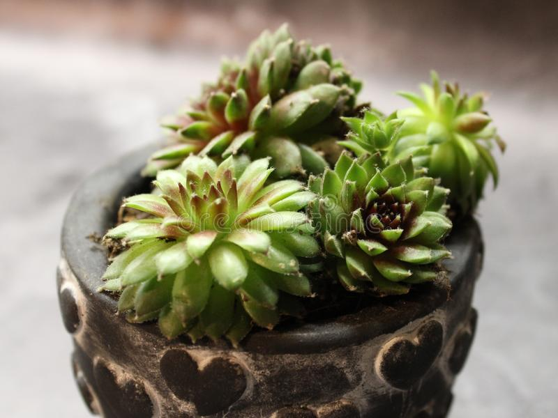 Some succulents in a pottery. On marble background stock images