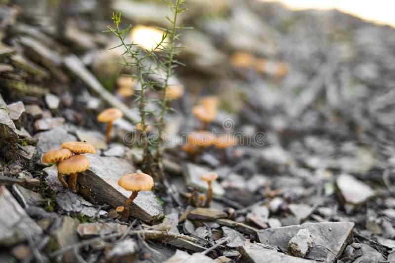Some tiny mushrooms on a a rocks floor royalty free stock photo