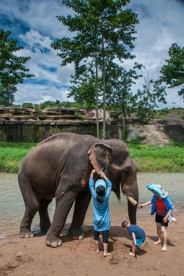 Some traveler feeds the elephant stock image