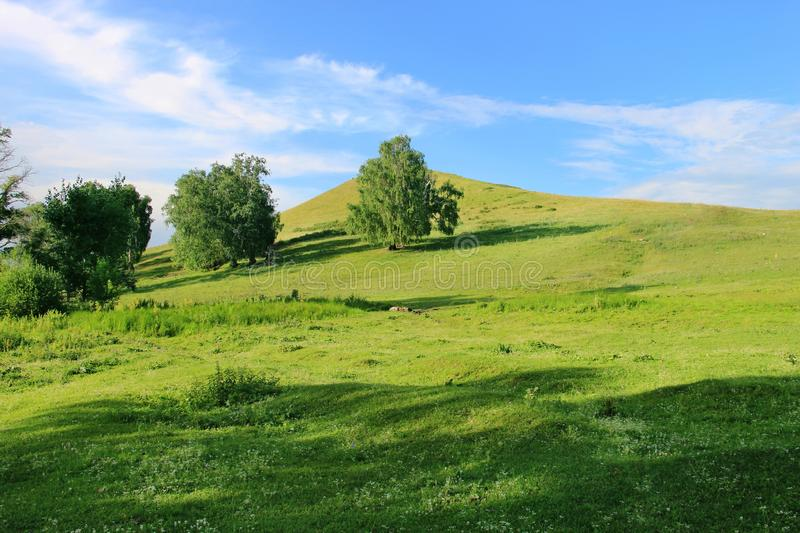 Some trees on a green hill at one summer day.  stock photos