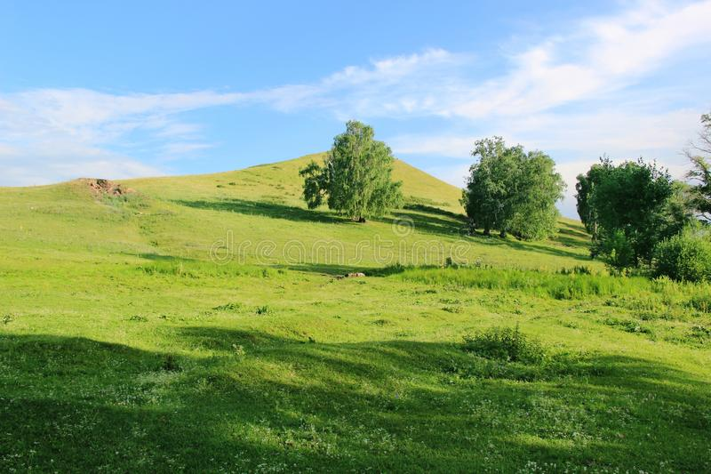 Some trees on a green hill at one summer day.  royalty free stock photography