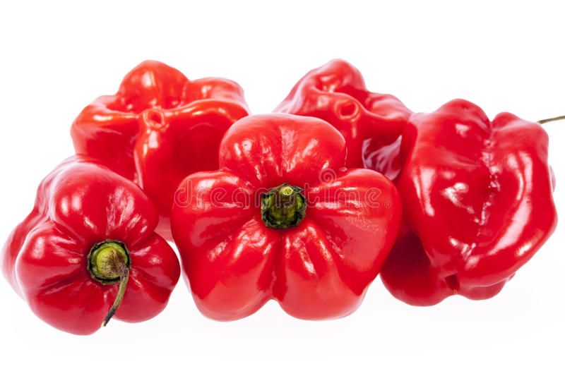 Some vegetable of red chili pepper habanero isolated on white background stock images