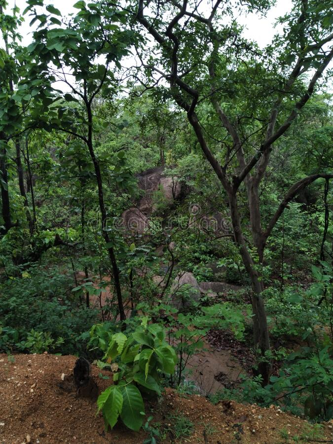 Some where in forest of indiA lovely place royalty free stock photos